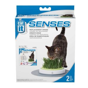 Cỏ Mèo Tự Trồng Hagen Catit Senses