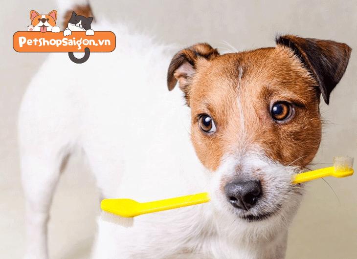 Cách khử mùi hôi của chó
