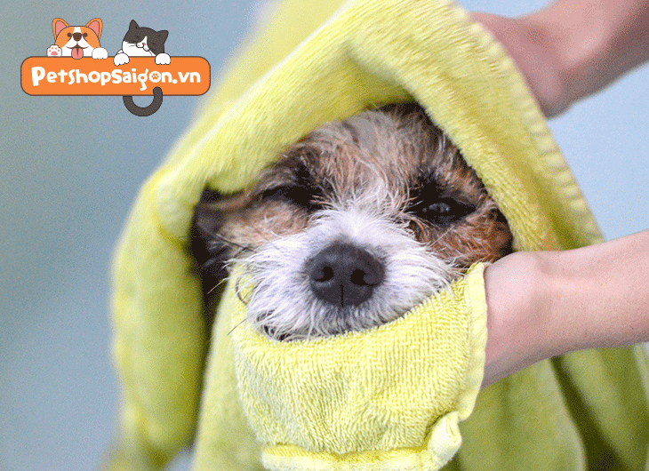 Cách tắm cho chó con 2 tháng tuổi