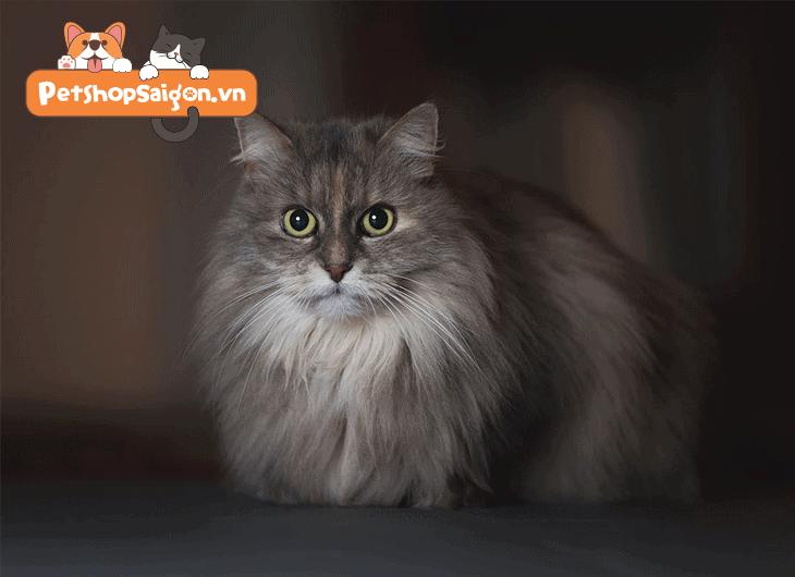 Cho mèo ăn gì để lông mượt