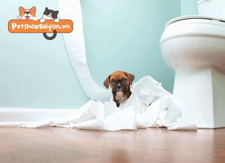 thuốc xịt cho chó đi vệ sinh đúng chỗ
