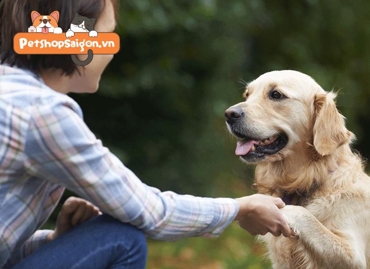 cách dạy chó bắt tay