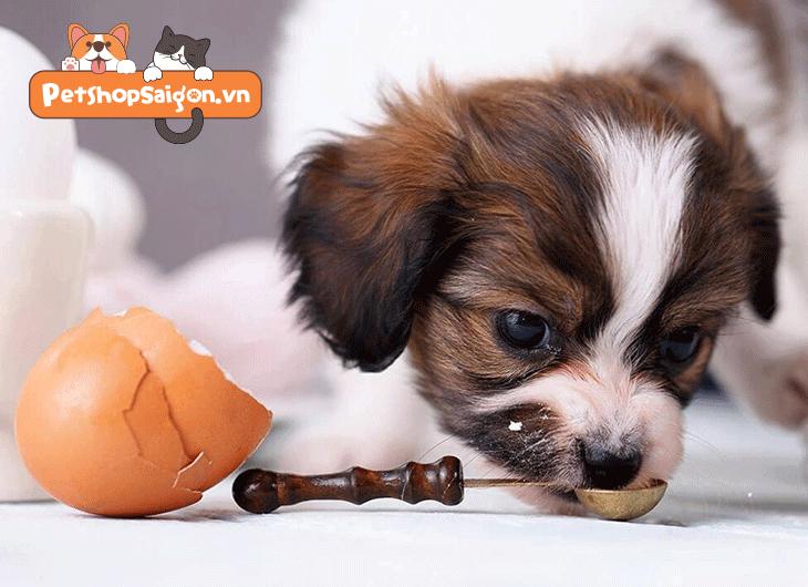 cho chó ăn trứng gà sống