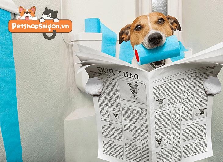 dạy chó đi vệ sinh trong wc