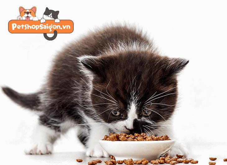 nên cho mèo con ăn gì