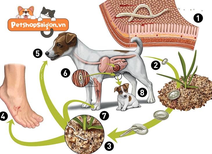 các loại ký sinh trùng ở chó