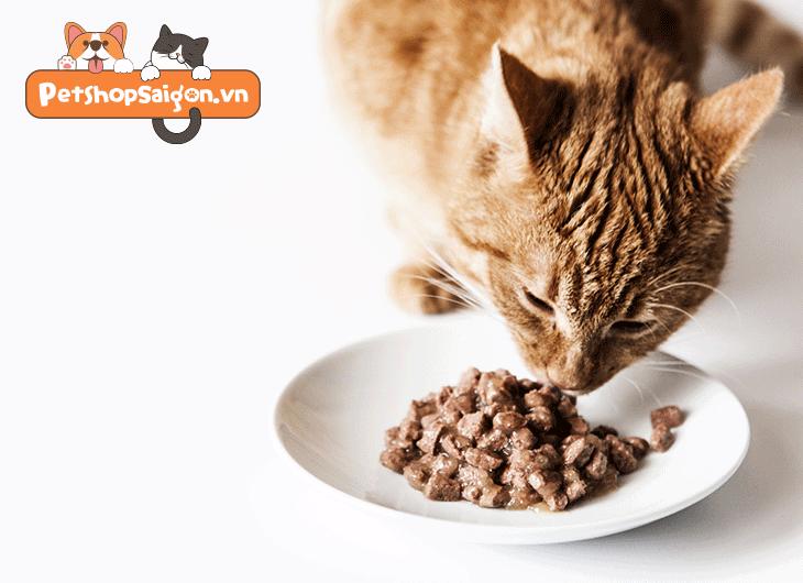 khẩu phần ăn cho mèo trưởng thành