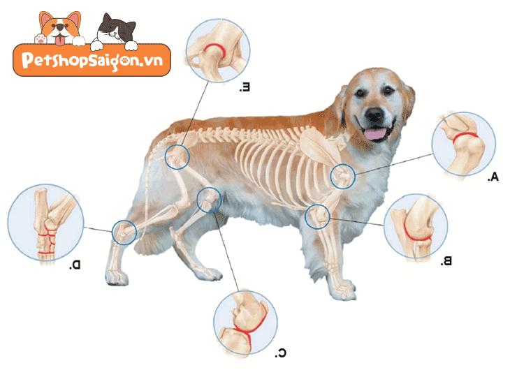 5 mẹo phòng tránh viêm khớp ở chó