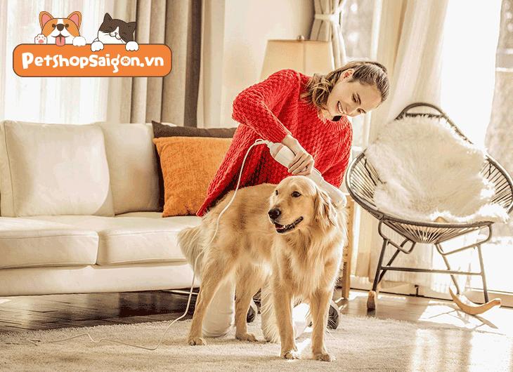 Cách duy trì bộ lông mượt và làn da khỏe mạnh cho chó