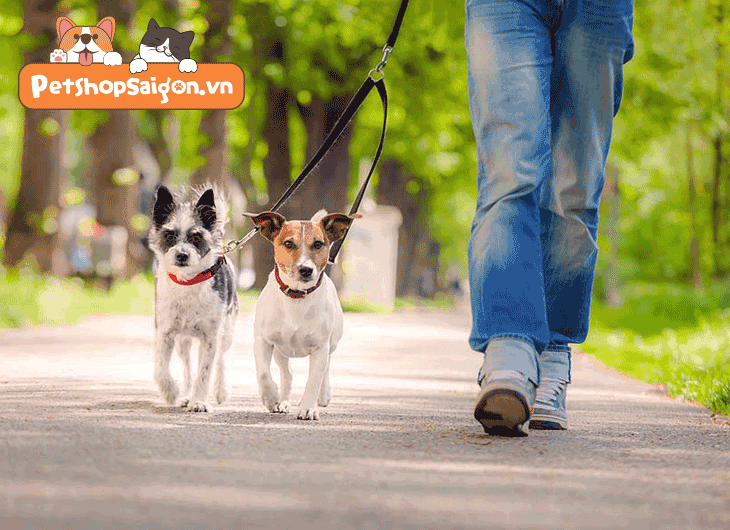 Dắt chó đi dạo ở đâu? Dịch vụ dắt chó đi dạo nào rẻ?