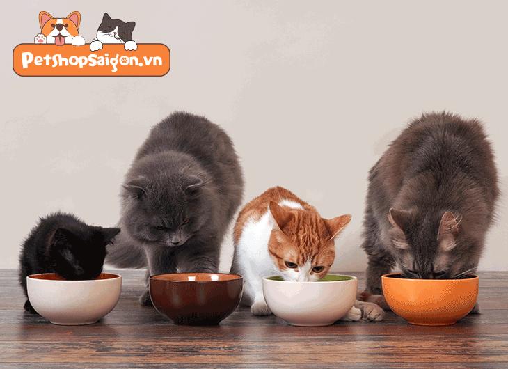 gel dinh dưỡng cho mèo