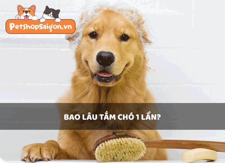 Bao lâu tắm chó 1 lần?