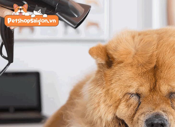 sữa tắm dầu tắm cho chó