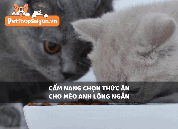 Cẩm nang chọn thức ăn cho mèo Anh lông ngắn