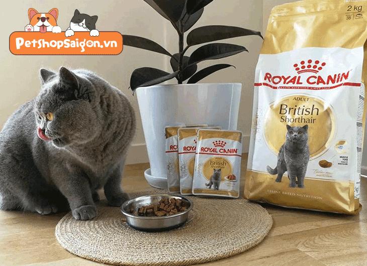 thức ăn cho mèo anh lông ngắn