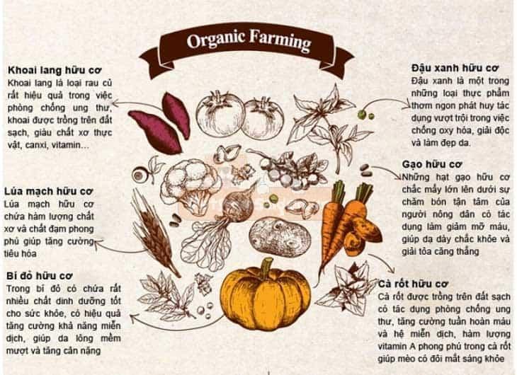 Thức ăn organic cho mèo con ANF 6 Free Indoor 6kg