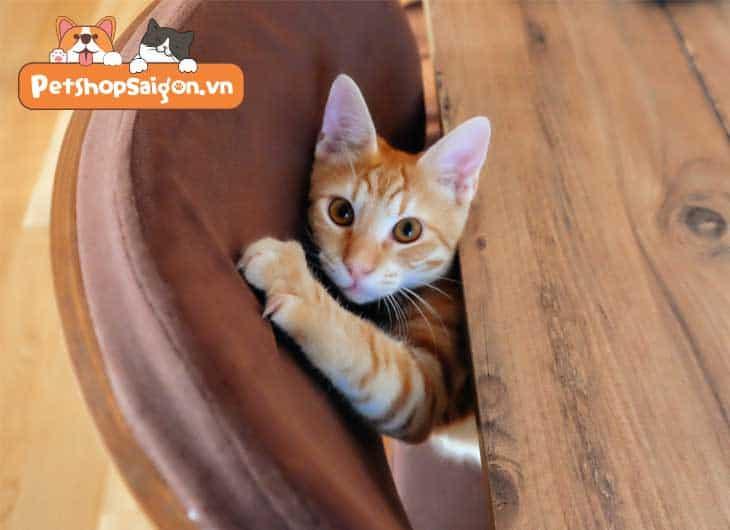 Cách ngăn chặn mèo cào đồ nội thất