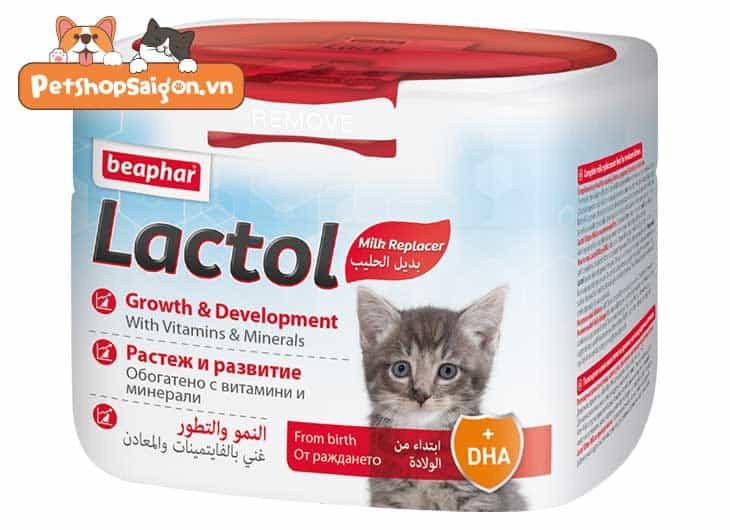 sữa cho mèo con
