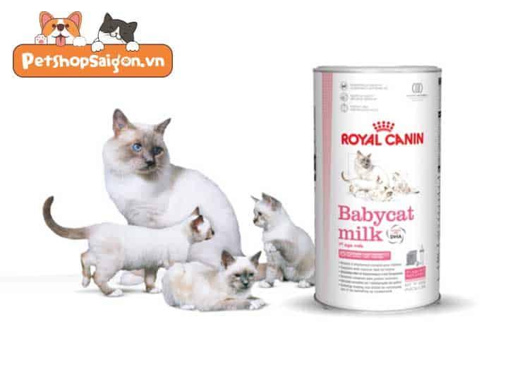 cách cho mèo con uống sữa