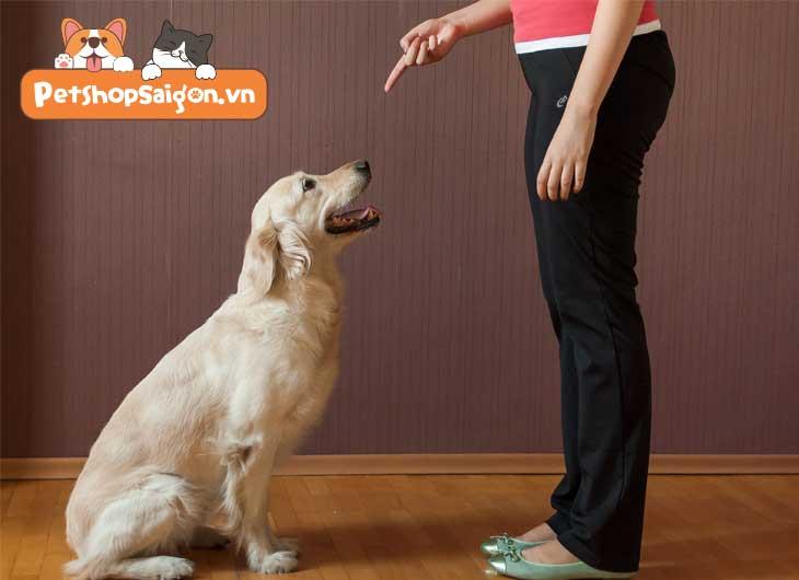 cách dạy chó ngồi