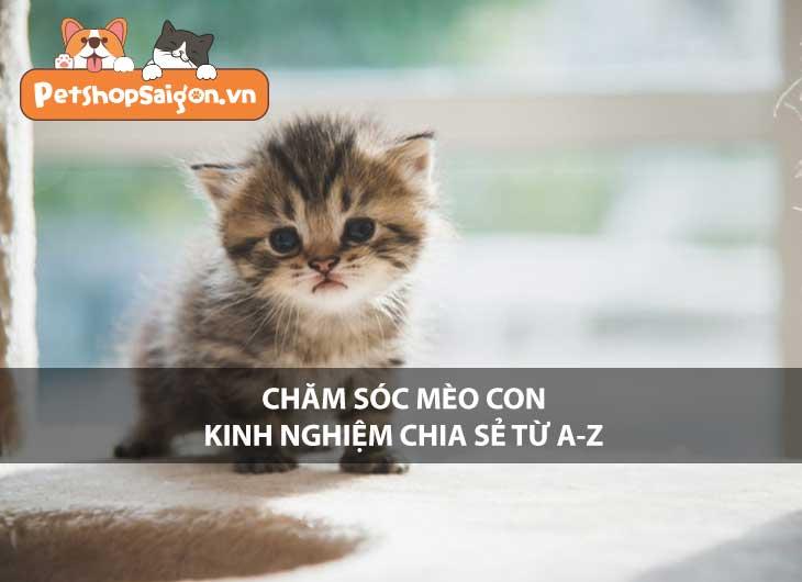 Chăm sóc mèo con: Kinh nghiệm chia sẻ từ A-Z