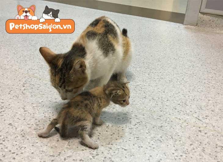 chăm sóc mèo con