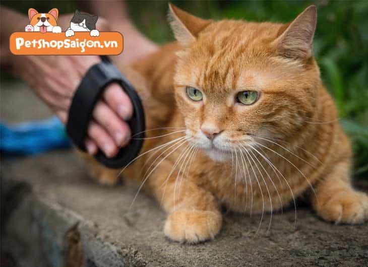 Mẹo chải chuốt cho mèo chuẩn nhất