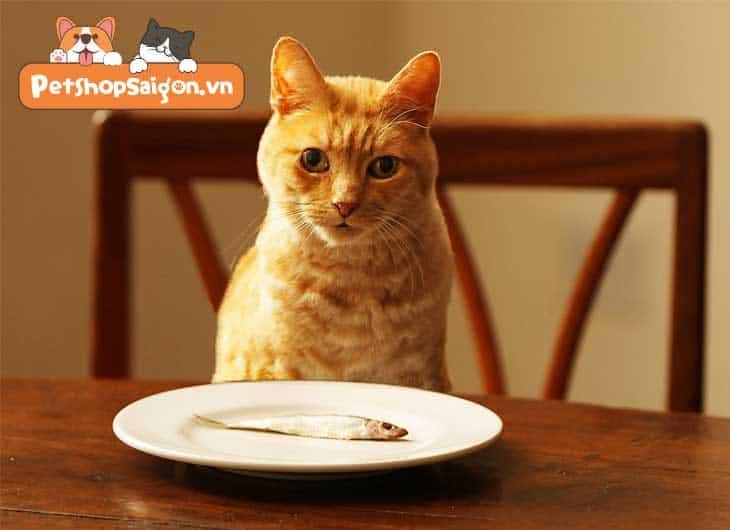 mèo thích ăn gì nhất