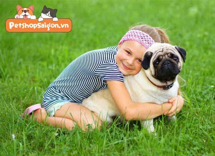cách nuôi chó pug