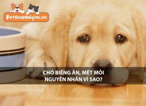 Chó biếng ăn mệt mỏi, nguyên nhân vì sao?