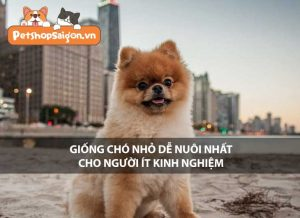 Giống chó nhỏ dễ nuôi nhất cho người ít kinh nghiệm