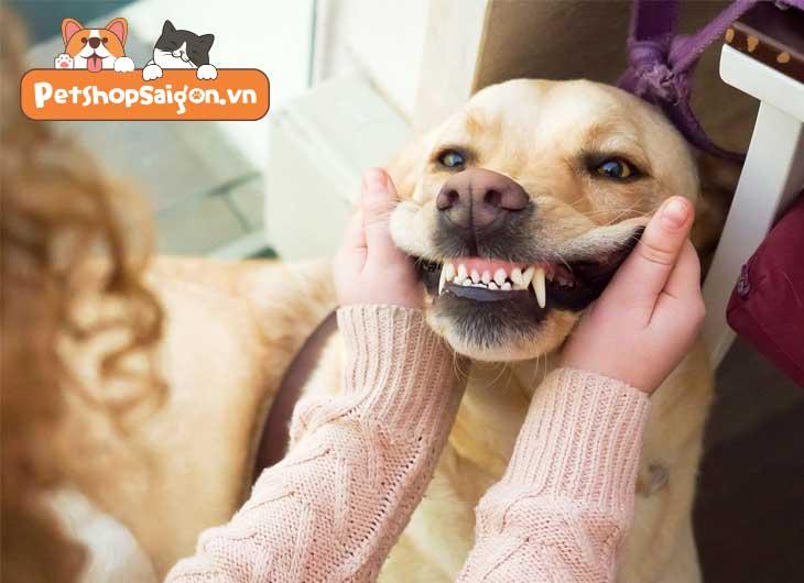 lấy cao răng cho chó