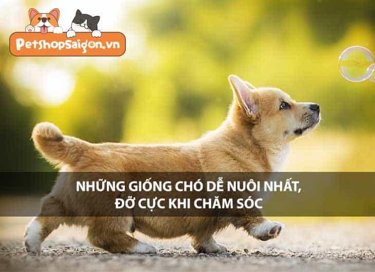 Những giống chó dễ nuôi nhất, đỡ cực khi chăm sóc
