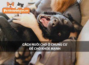 Cách nuôi chó ở chung cư để chó khỏe mạnh