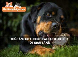 Thức ăn cho chó Rottweiler (chó Rốt) tốt nhất là gì?
