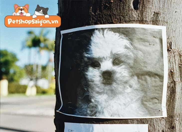 Cách tìm chó bị mất