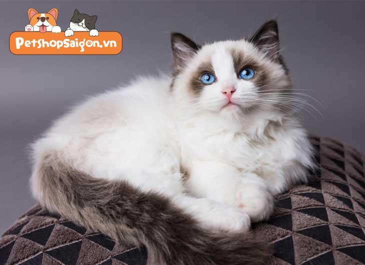Các loại mèo nuôi trong nhà