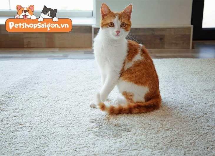 Cách giữ nhà luôn sạch sẽ khi nuôi chó mèo