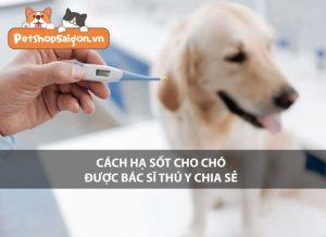 Cách hạ sốt cho chó được bác sĩ thú y chia sẻ