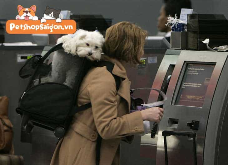 có được mang chó lên máy bay không