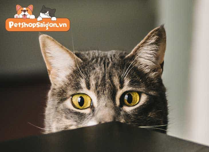 Đặc tính của mèo