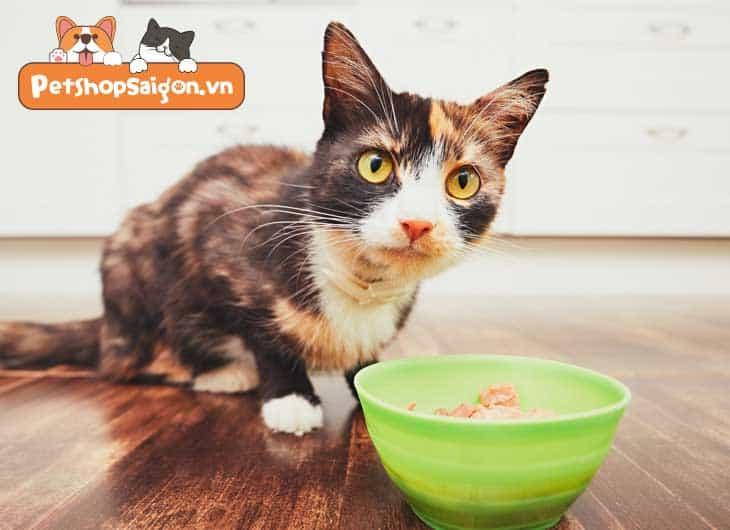 Mèo ăn bao nhiêu thức ăn ướt là đủ?