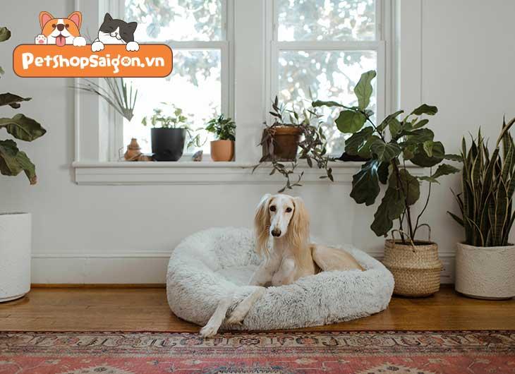 Nhóm máu chó là gì? Chó có bao nhiêu nhóm máu?