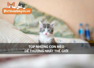 Top những con mèo dễ thương nhất thế giới