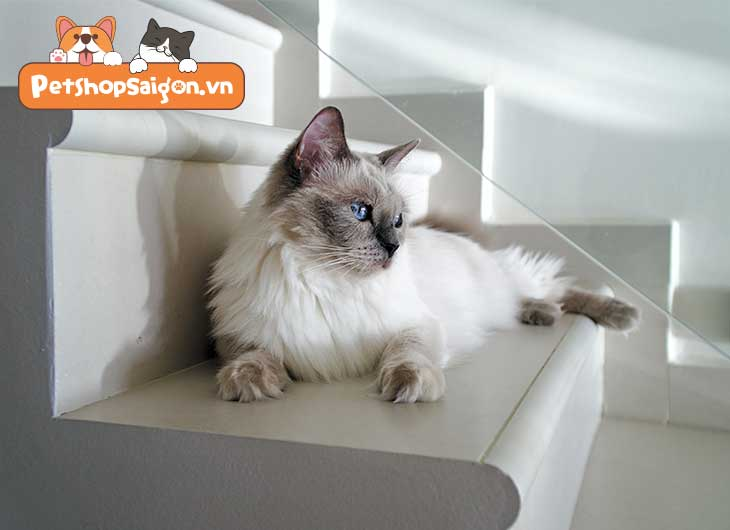 những con mèo dễ thương nhất thế giới