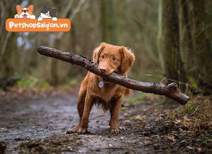 sự trung thành của loài chó