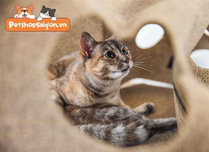 Tại sao mèo lại đuổi theo tia laser