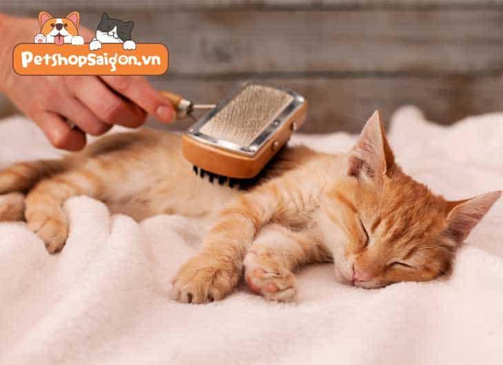 Top 8 điều mà mèo yêu thích