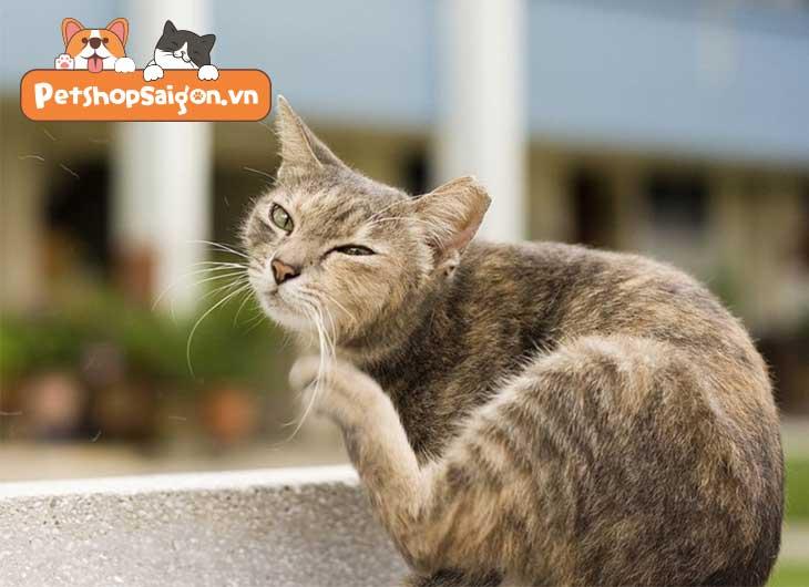 Cách trị rận cho mèo