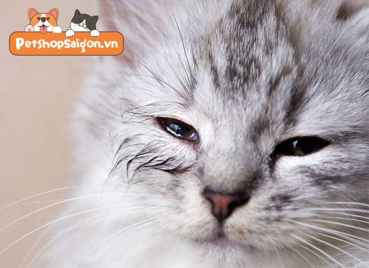 Mèo bị sổ mũi